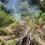 Polisi Musnahkan 6 Hektare Ladang Ganja di Bireun dengan Cara Dibakar